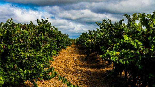 Tejo Vineyards (photo: CVR Tejo)