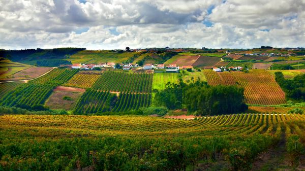 Vineyards (photo: Alamy)