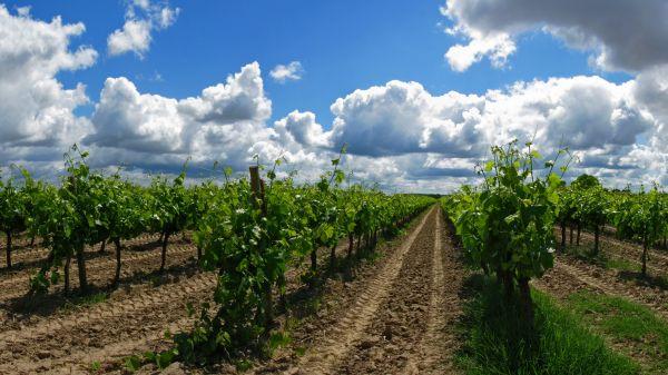 Tejo Vineyards (photo: Alamy)