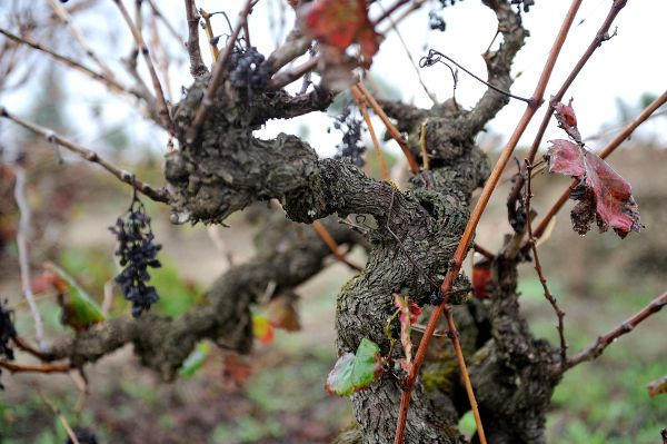 A Wine from Tejo may be in Your Future