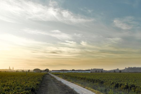 How to Reinvent A Winery, Portuguese Style